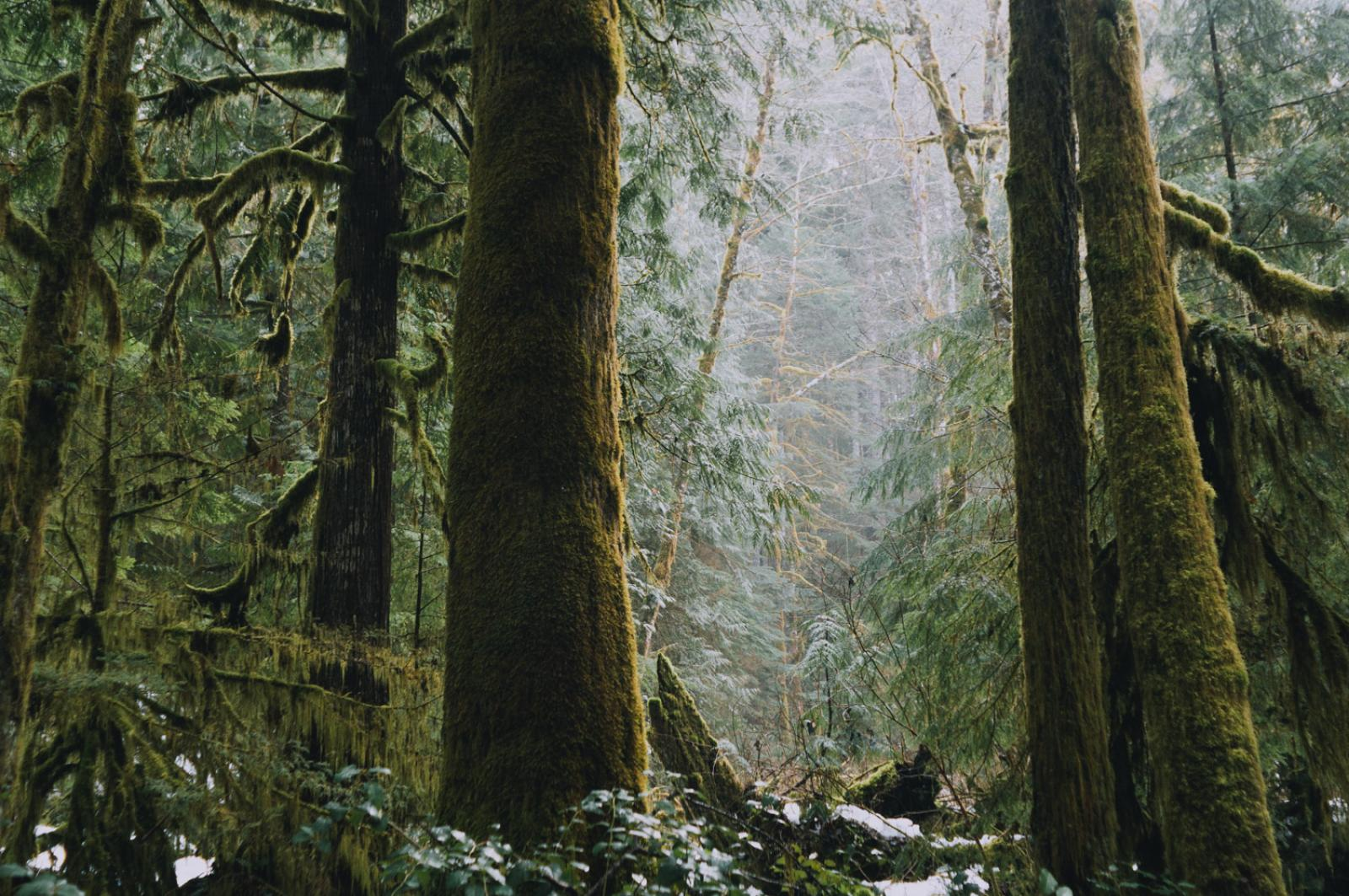 Forest Bathing Photo by Adrian Unger